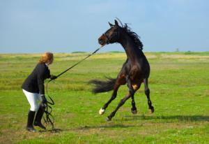 difficulthorse2