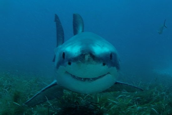 happy-shark